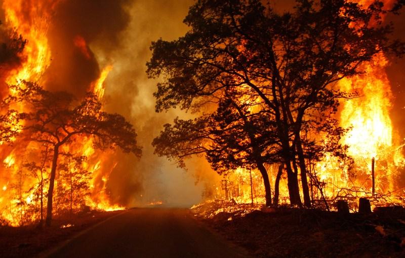 wildfire copy