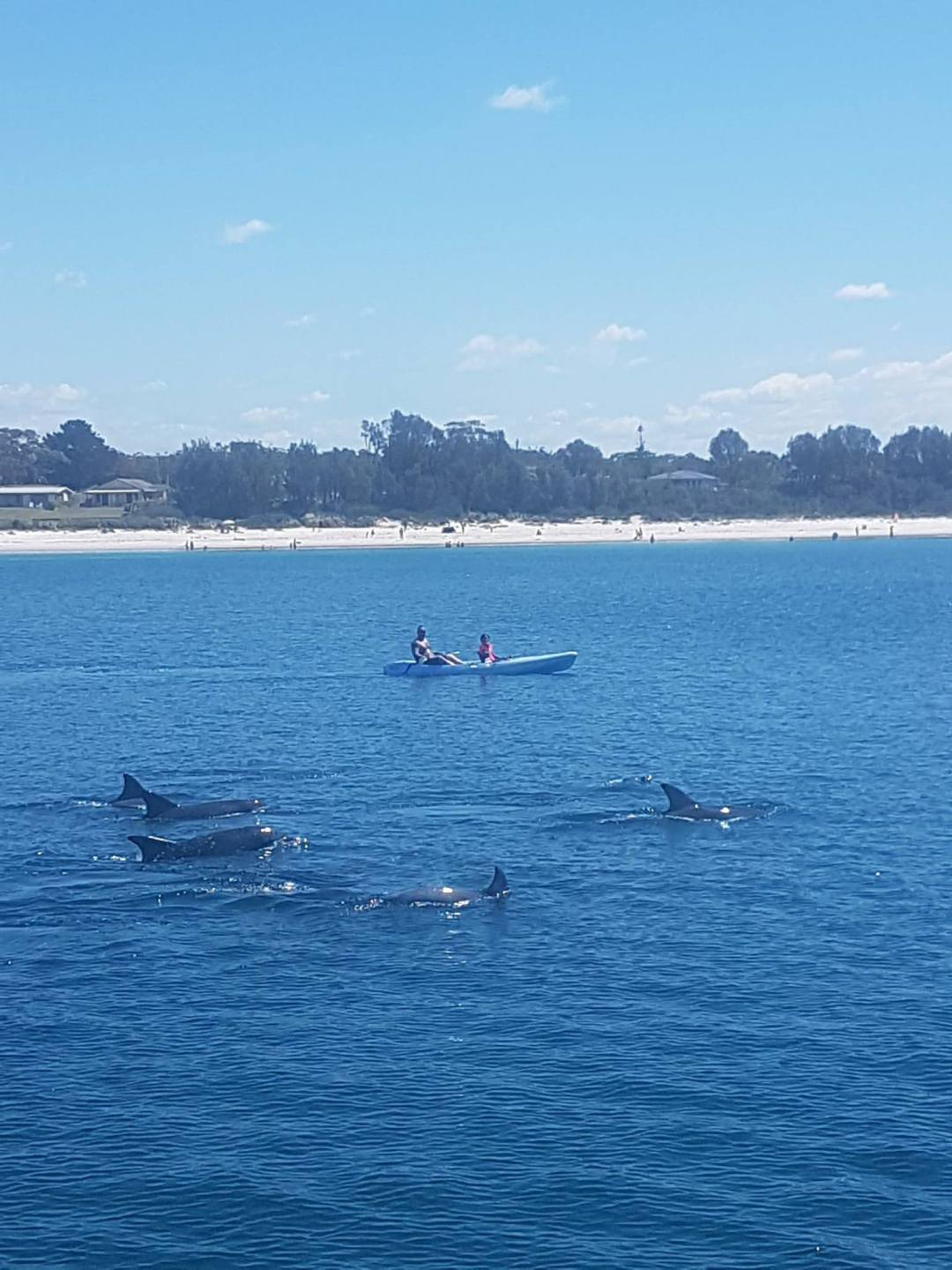 Jervis Bay Backpacker Day Tour