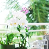 Como Cuidar las Orquídeas