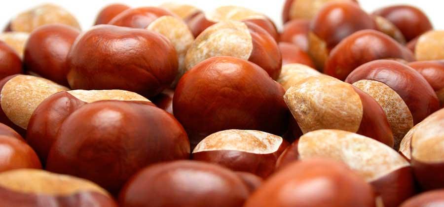 castaña los frutos secos mas saludables