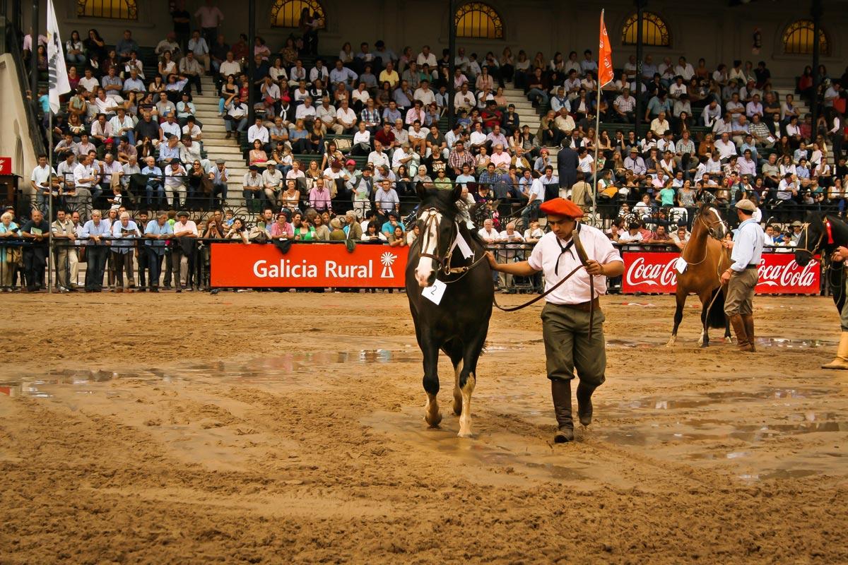 EXPOSICION-NUESTROS-CABALLOS-LA-RURAL-2016-9