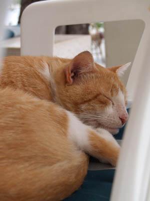 sieste féline ©cocineraloca.fr