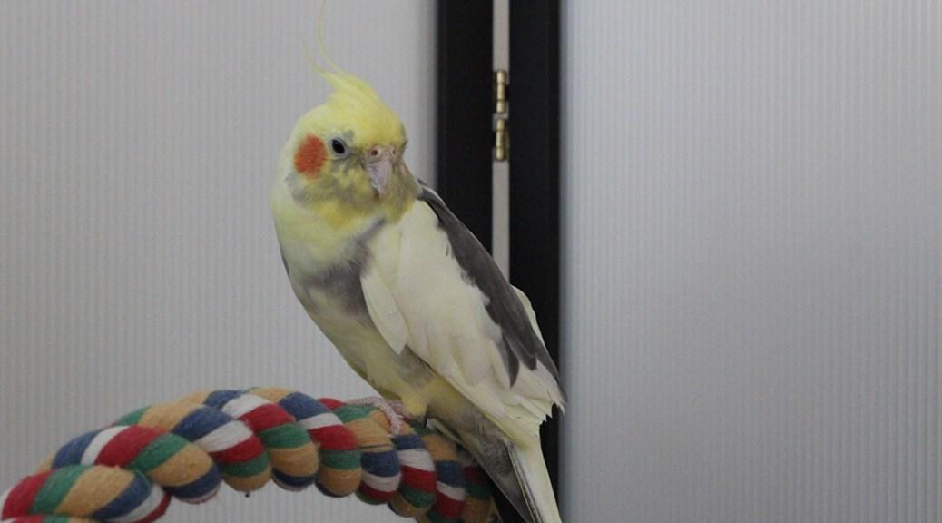Rope Bird Perch
