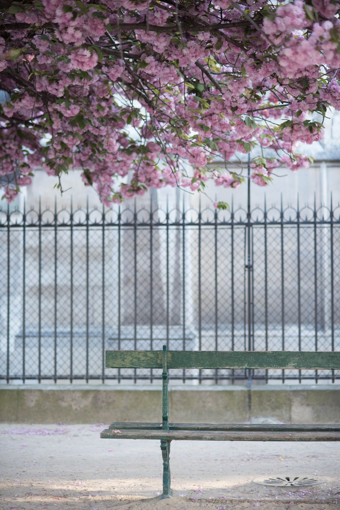 A green bench under a cherry blossom tree in Paris, captured by travel blogger Cee Fardoe of Coco & Vera