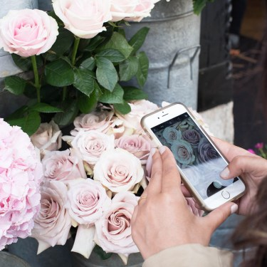 Travel blogger Cee Fardoe of Coco & Vera photographs pink roses at Liberty London on her iPhone six