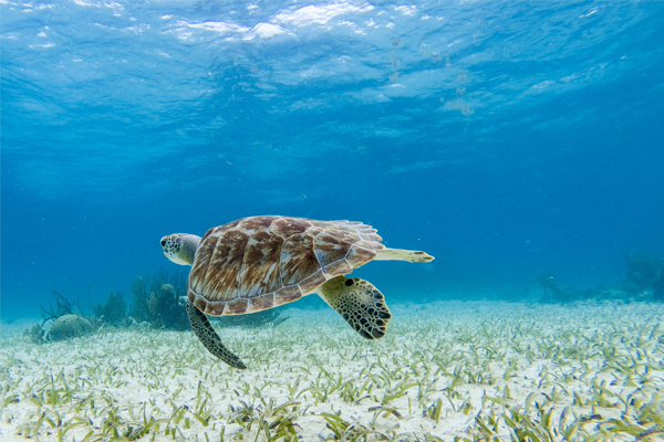 Experience Belize's marine animals