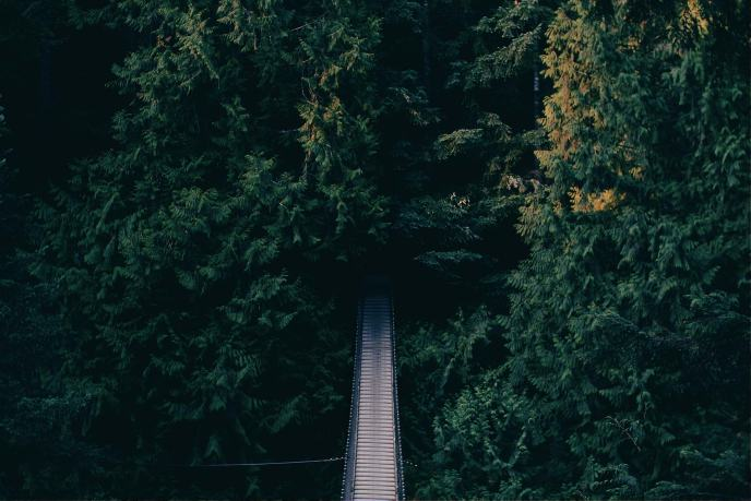 Yemyeşil bir ormana açılan yol.