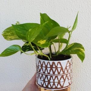 white perez planter