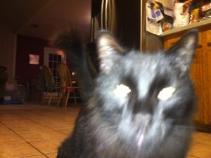Ozzy Kitty