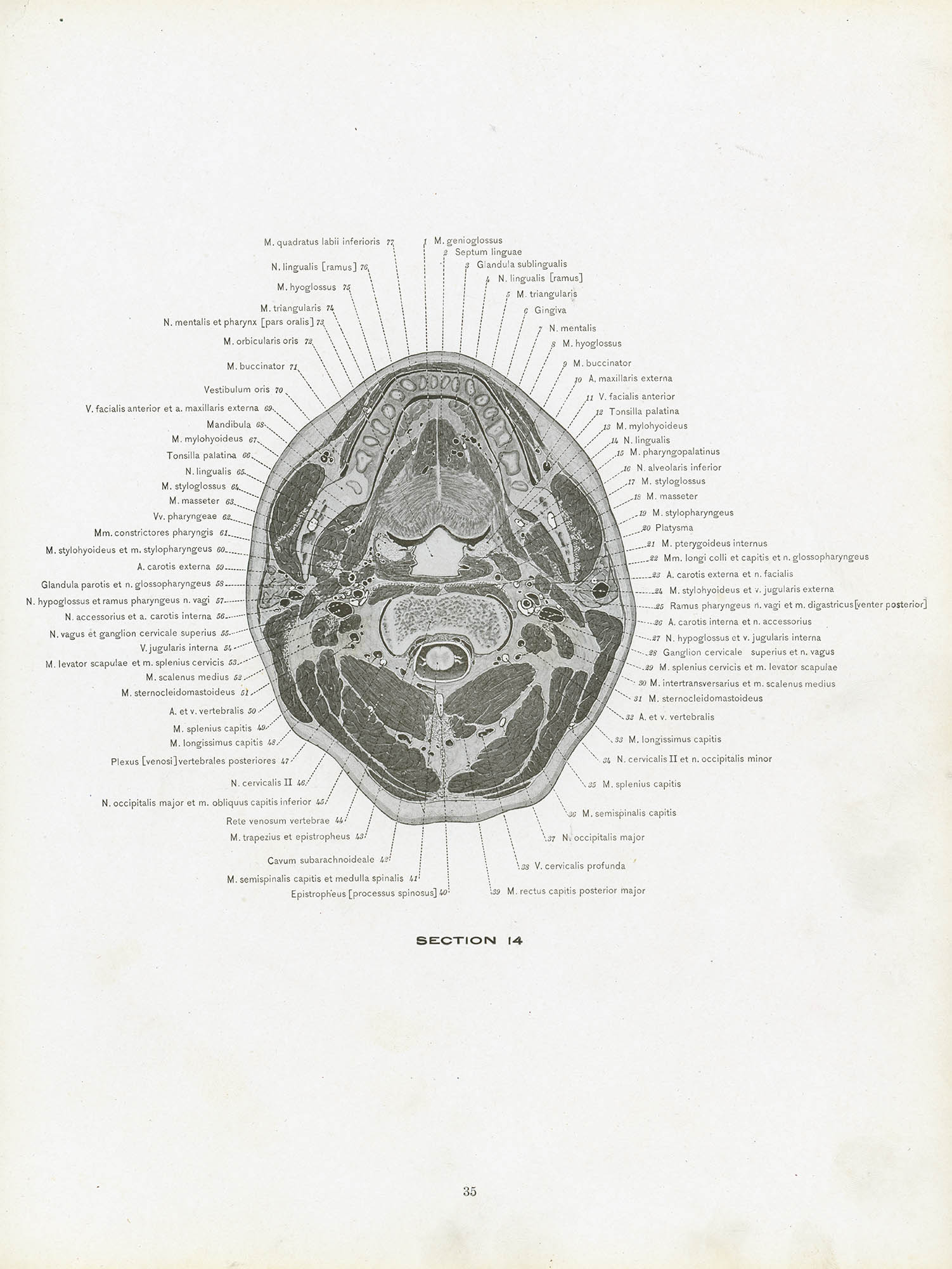 A Cross Section Anatomy