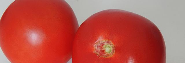 pomidory pomidorowa