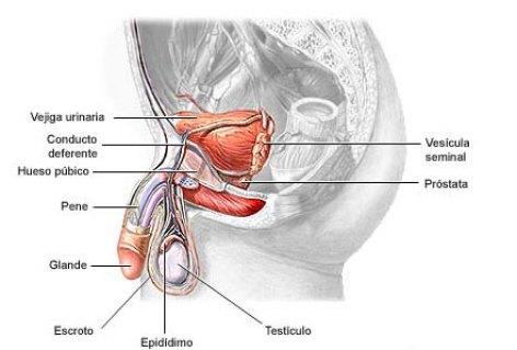 epidermitis