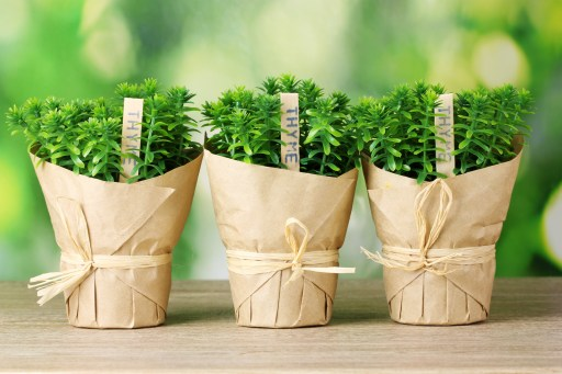 potted herbs for a shower favor
