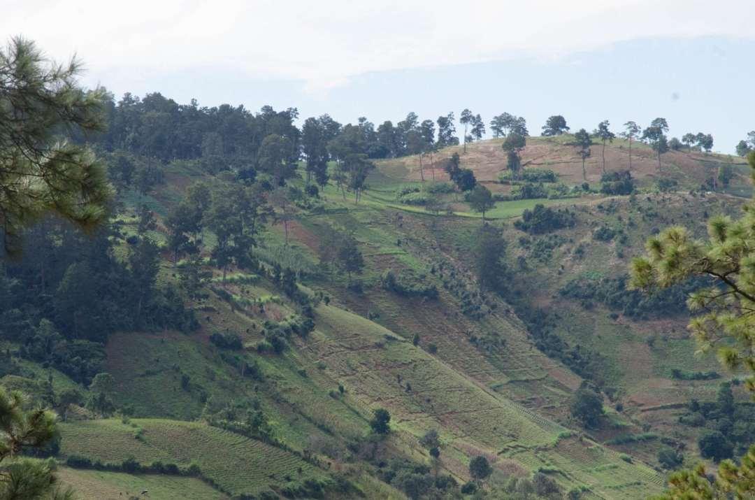 haiti 1804 coffee