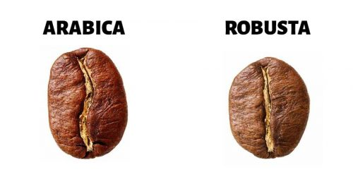 arabica robusta beans