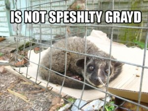 Civet cat in cage