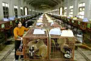 Kopi luwak coffee factory