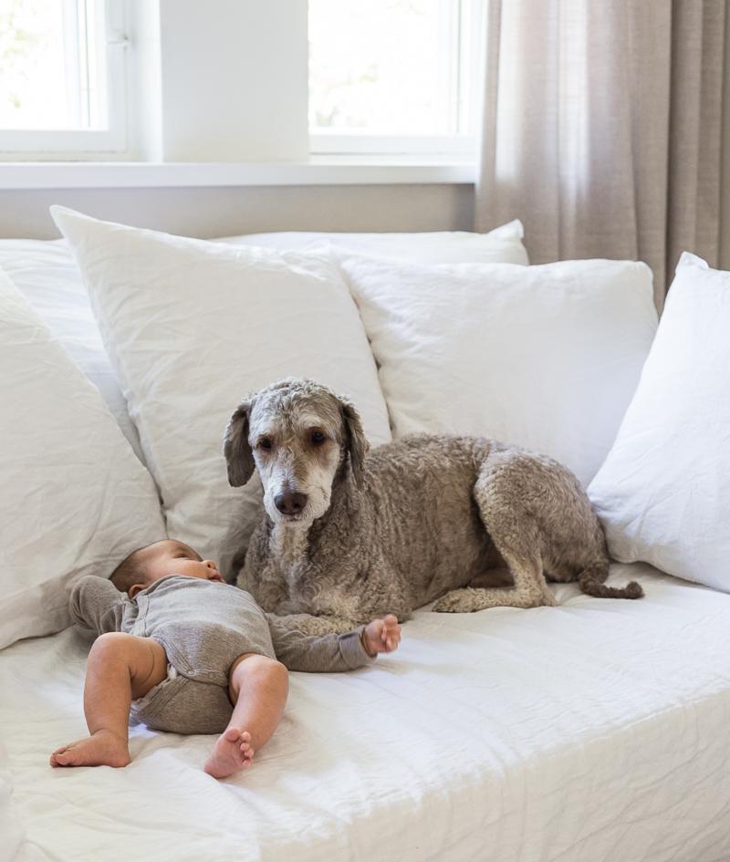 espanjanvesikoira, koira, vauva, ystävyys, eläinystävät