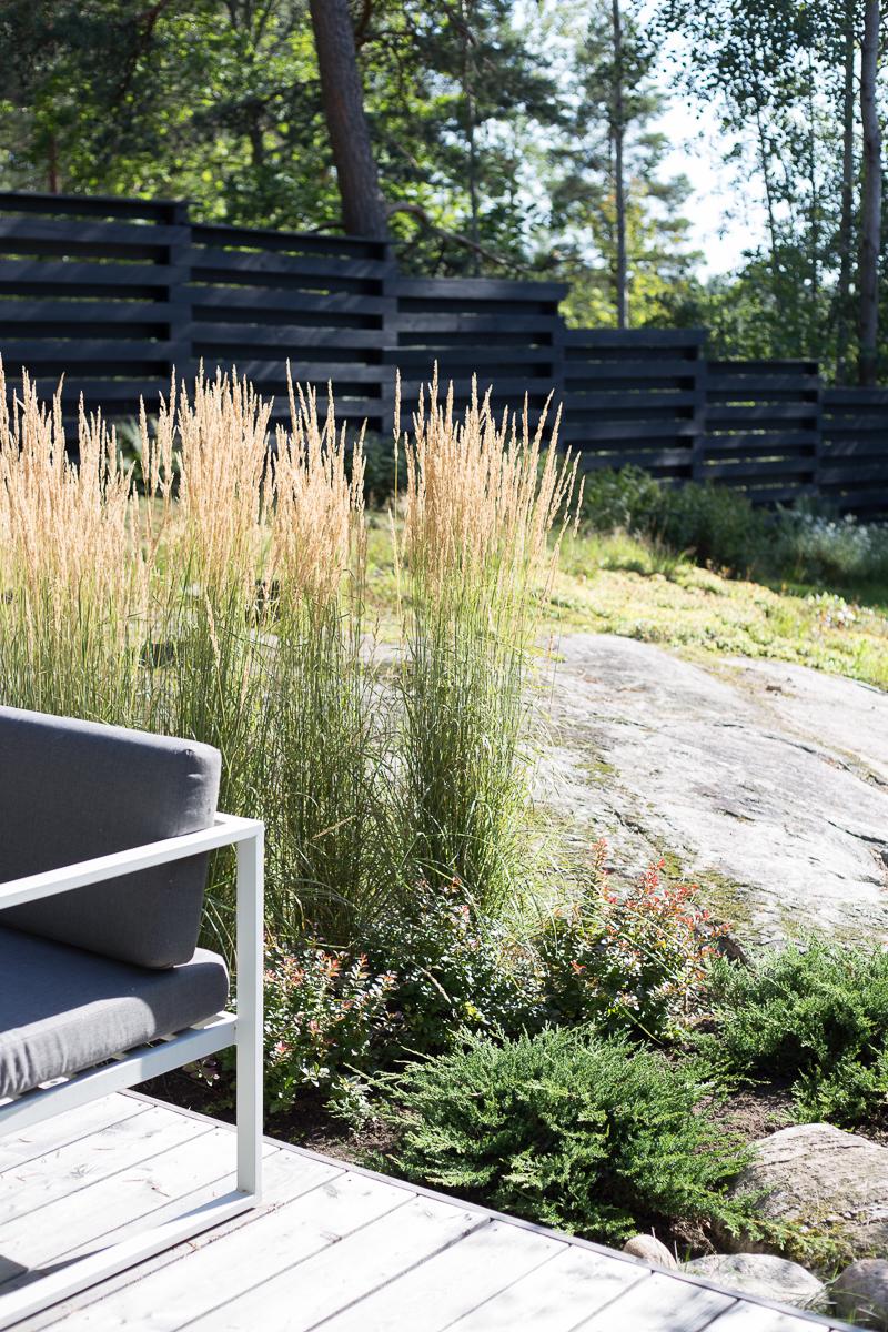 terassi siperianlehtikuusi, koristekastikka, koristeheinät puutarhassa, kallio puutarhassa