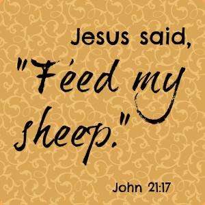 feed-my-sheep