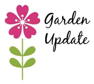 Garden Update & Wooden Tomato Cage Tutorial - Coffee With Us 3