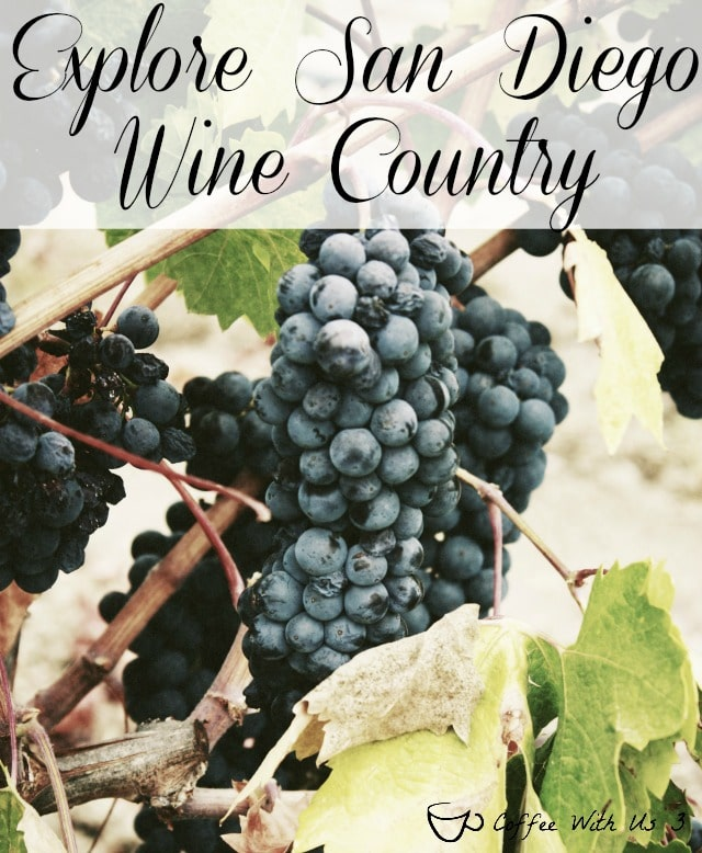 Wine making has been prominent in southern California since 1781 and surprisingly, that history began in San Diego. Find out more about present-day San Diego wineries and vineyards.