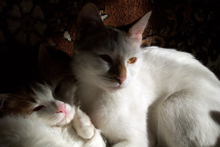 recherche chaton femelle