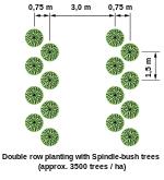 distance de plantation des arbres