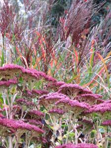 nature et découverte jardinage