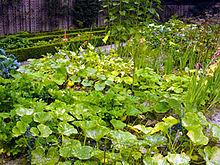 arrosage jardin potager