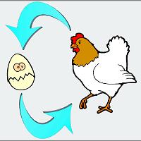 uovo gallina