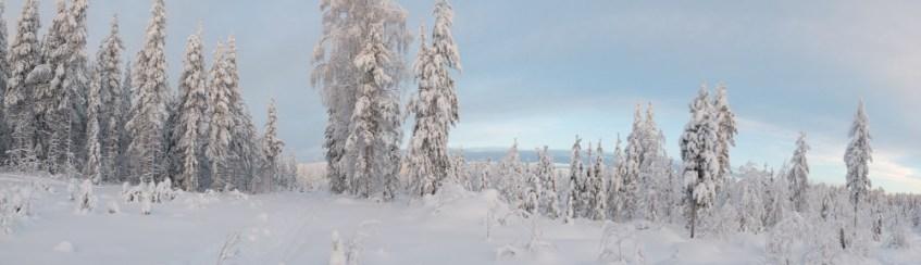 Finnland Waldruecken verschneit