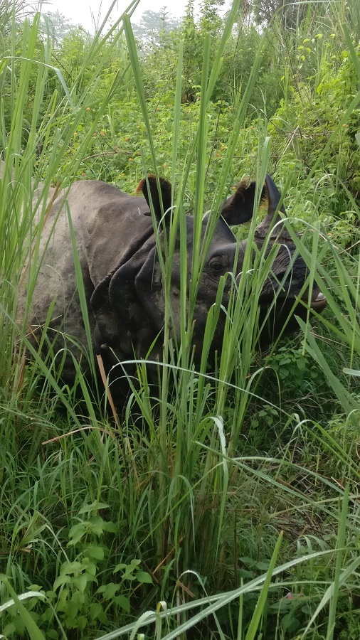 Rhino at Chitwan National Park