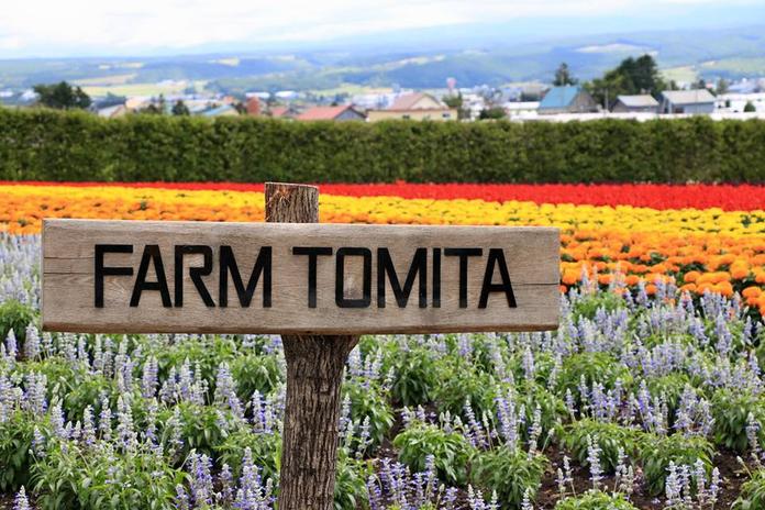 rsz_furano_farm_tomita