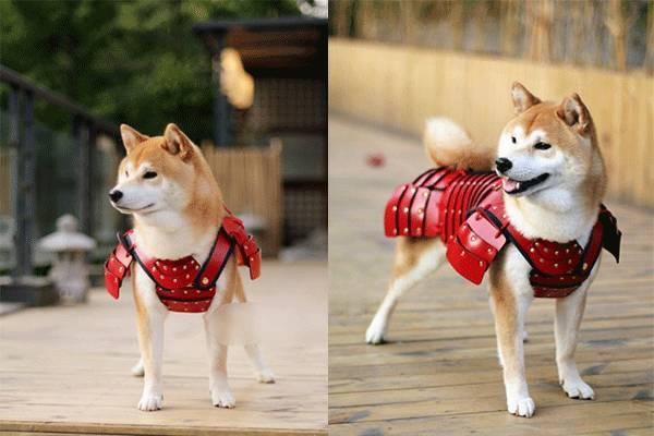 roupas samurai pet