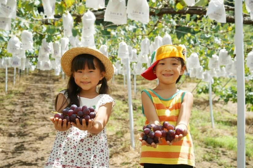 Colher frutas