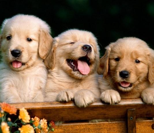 nomes cachorros