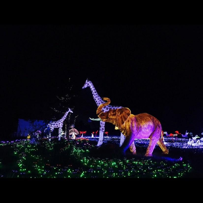 Zoo of Light