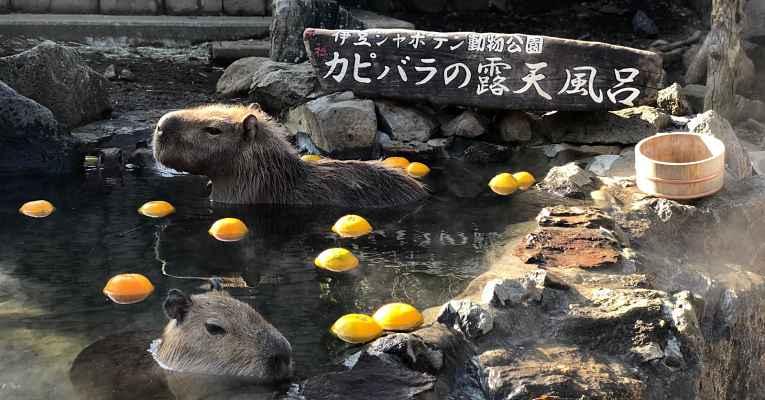 onsen shaboten park