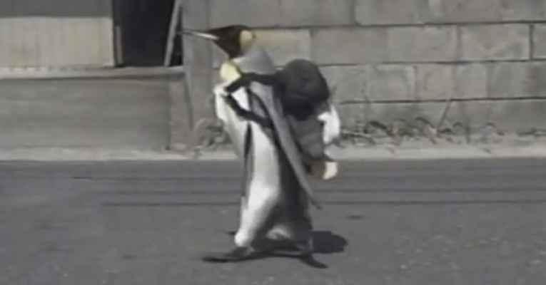Pinguim Lala Japão