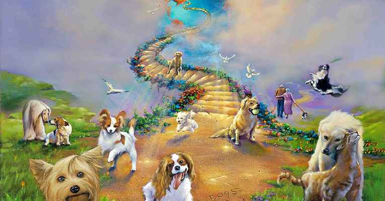 Pets vão para o céu?