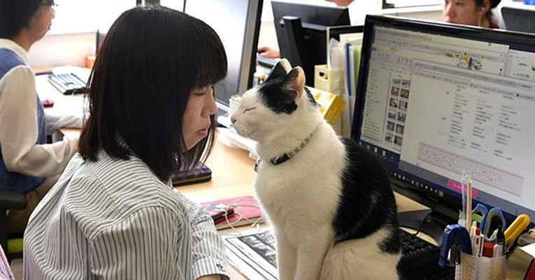 Gato da empresa Ferray