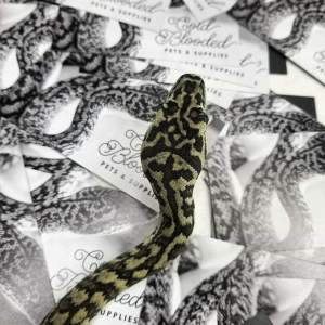 Cold Blooded Pets - photo of snake on business cards