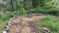 Creating a food forest