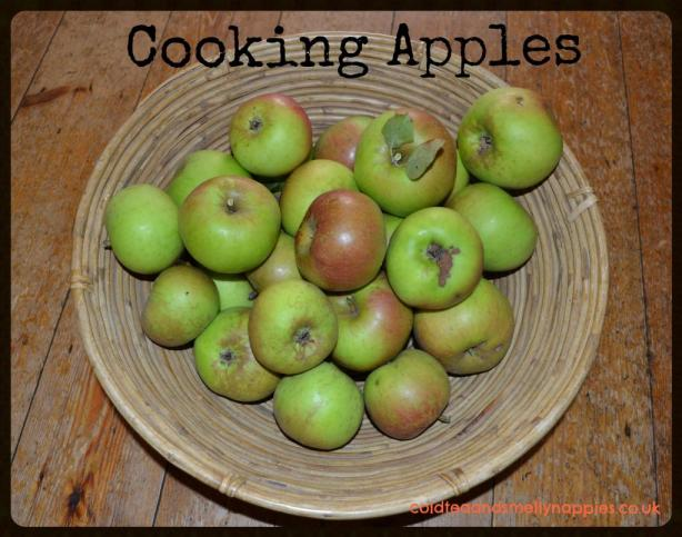 cooking apples