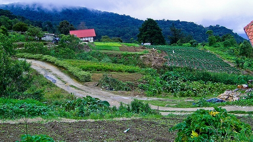 Cultivos en venezuela por tecnovm64