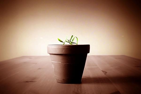 Crecimiento por Craig Sunter