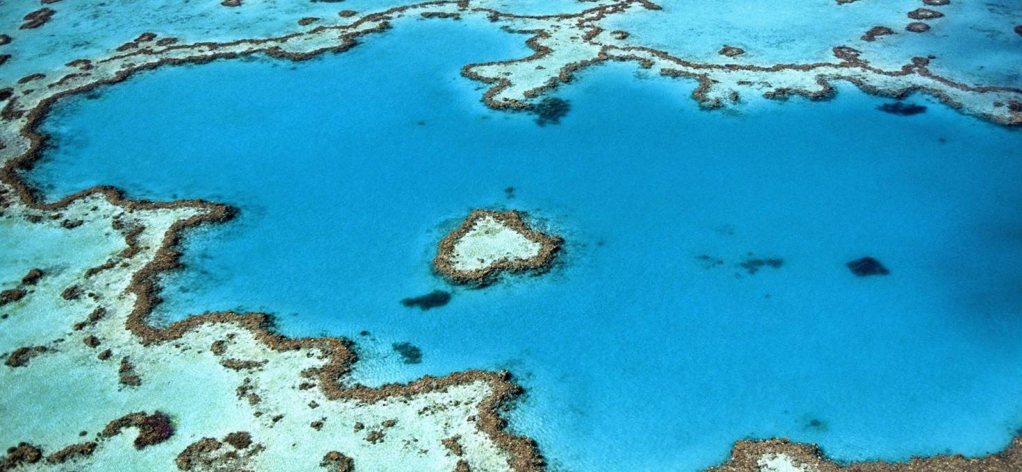 Ocean acidification explained in 'Marine Ecology'