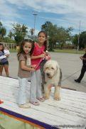 expo-mascotas-2009-186