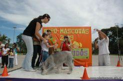 expo-mascotas-2009-288